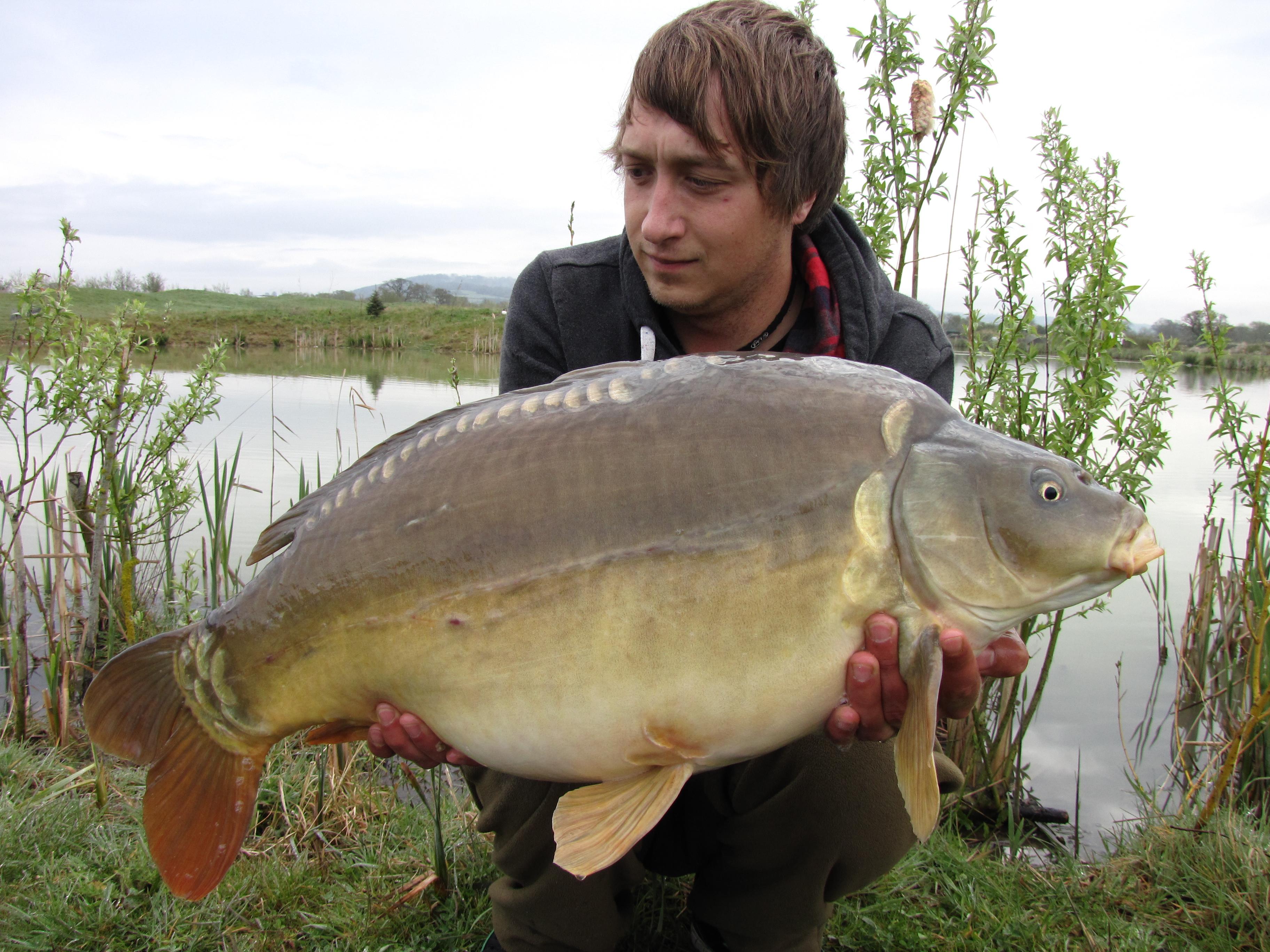 Little Hayes Specimen Lake Todber Manor Fisheries